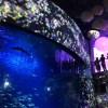 新江ノ島水族館のプロジェクションマッピング!