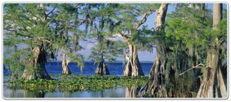 GRFBigPic Great Rivers of Florida