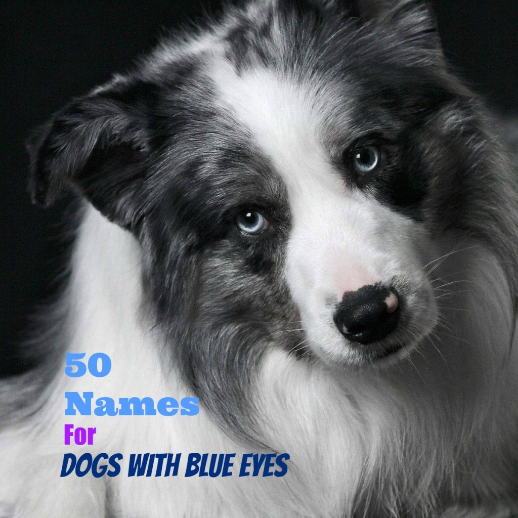 Fullsize Of Southern Dog Names