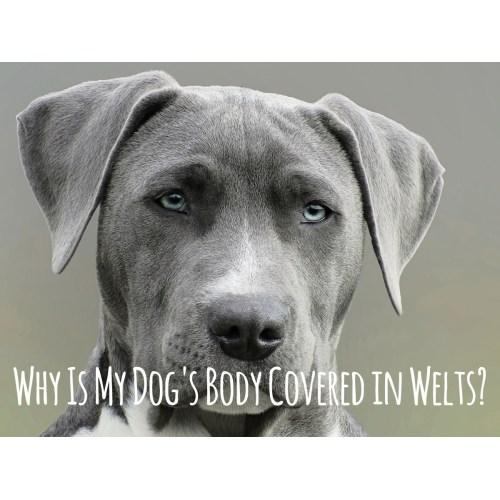 Medium Crop Of Can You Give Dogs Benadryl
