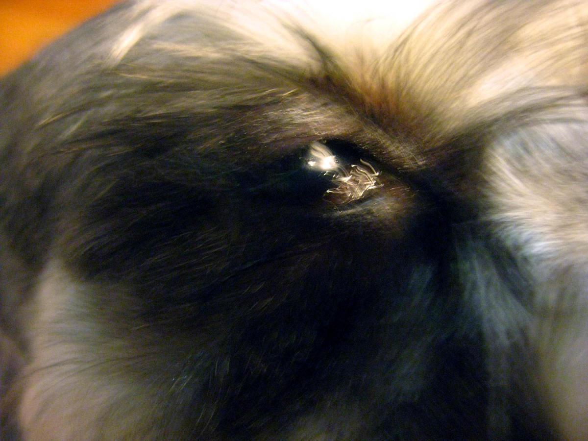 Fullsize Of Dog Eye Boogers