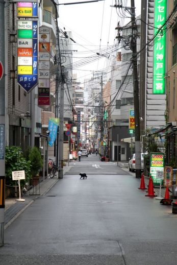 Y'a pas un chat à Kobe