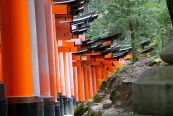 Fushimi Inari taisha, un sanctuaire shintoïste