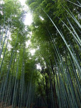 Une belle bambouseraie