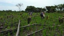 Un champ de riz