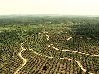 A palm oil field in Indonesia I Image: ecotoad.files.wordpress.com