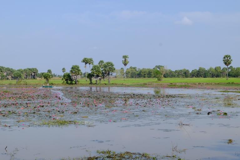 Rijstvelden ten zuiden van Phnom Penh