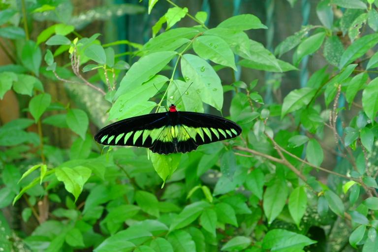 Vlindertuin in Kuala Lumpur