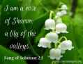 I am the rose of Sharon; the lily of the valleys. (3)