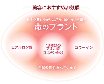 卵殻膜 化粧品
