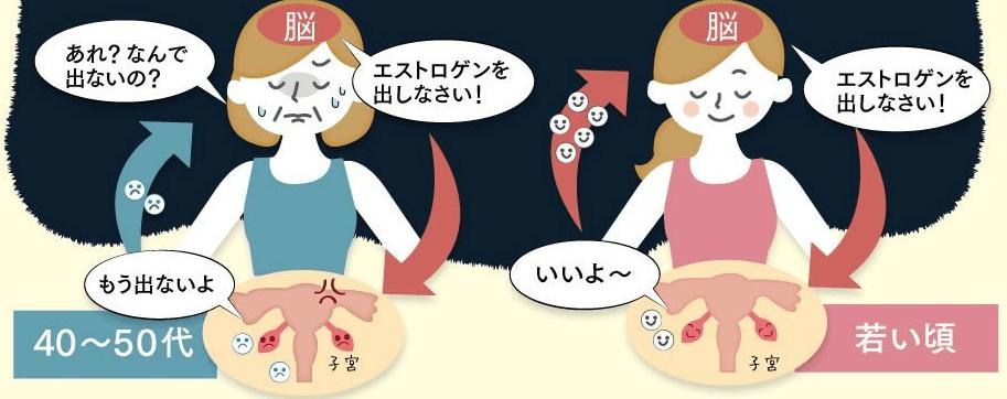 和漢×発酵白井田七。かめ