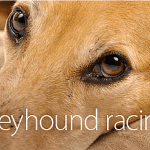 Animals Australia - Greyhound racing