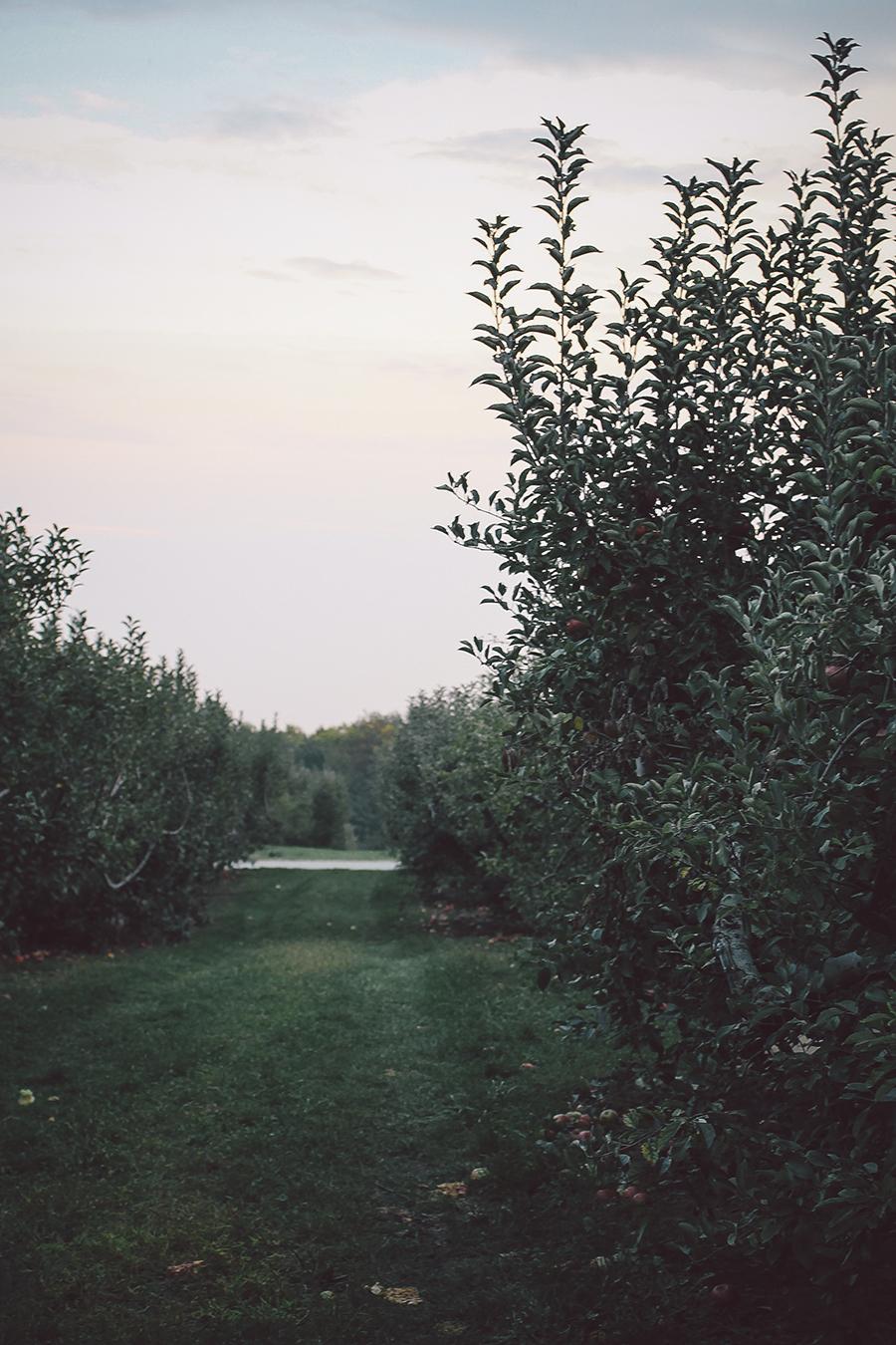 Maple Apple Bars