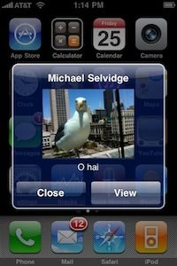 seagull-mms