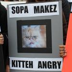 SOPA-Kitteh