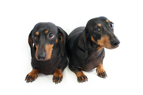 ss-clone-puppies-awww