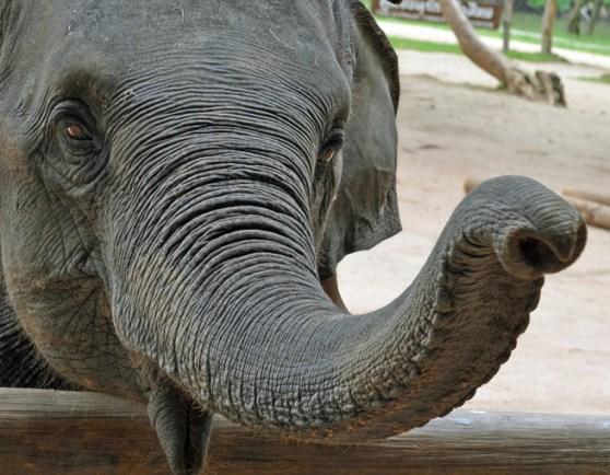 elephant-evernote