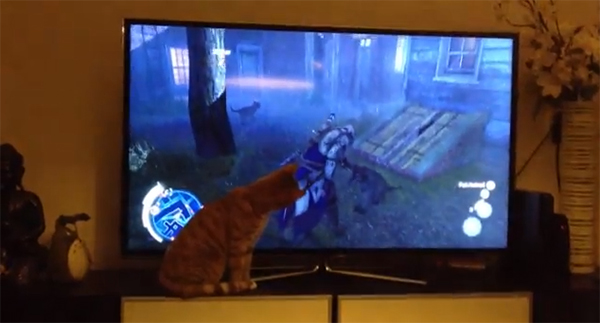 Assassin's Creed III cat