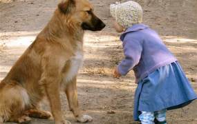 baby-girl-playing-with-dog