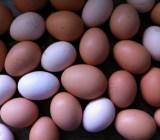 14 eggs