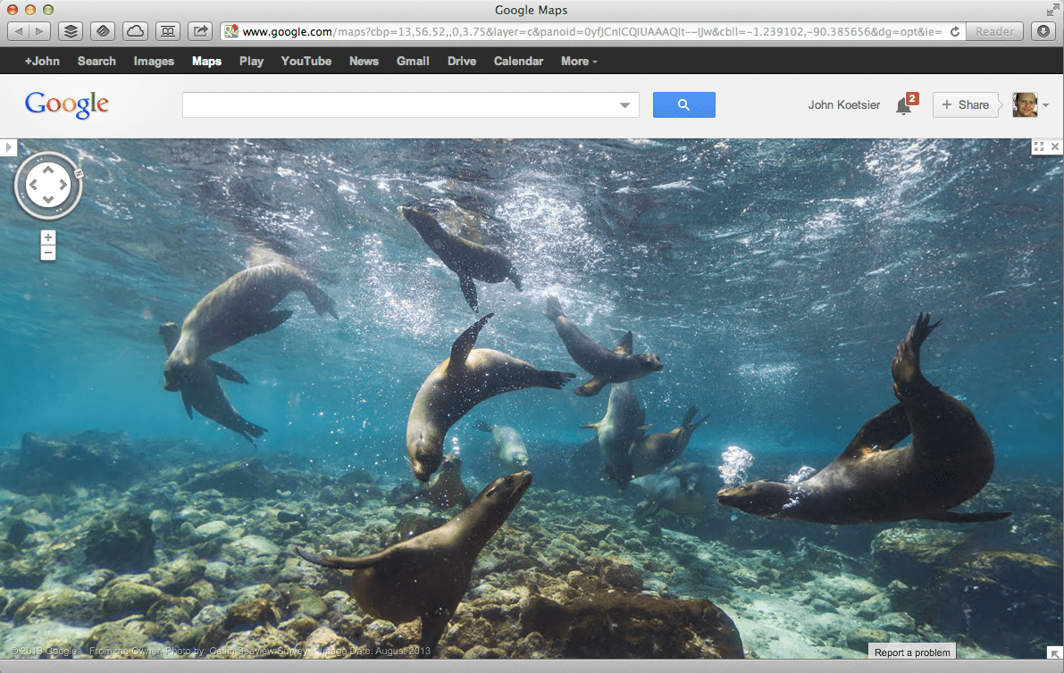 A sea lion traffic jam on Google Street View