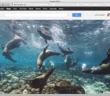 A sea lion traffic jam on Google Street View