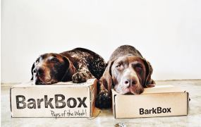 barkbox 2