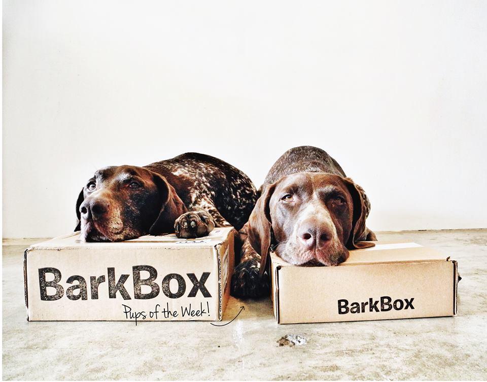 barkbox 2