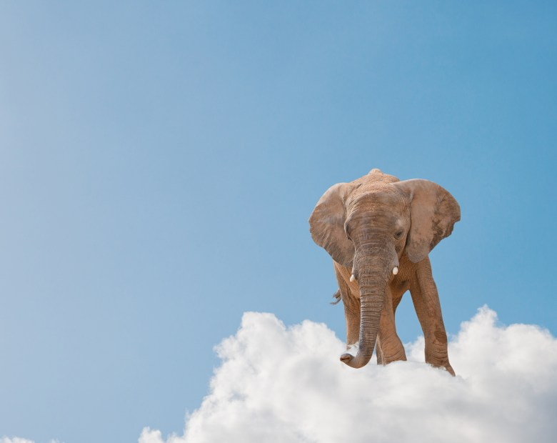 Cloudera is providing commercial support for its take on Hadoop -- whose mascot is an elephant -- on more and more public clouds. This time, it's the top one, Amazon Web Services.