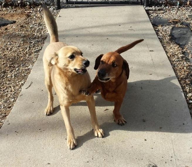 Dogs- Jones and Sancho