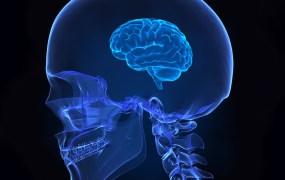 brain-fitness
