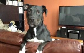 Photogenic Doggy