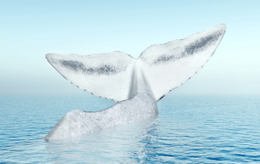 "AppNexus is after its ""White Whale"""