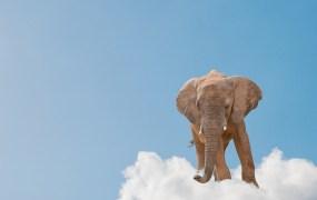 elephant-cloud-aaron-amat-shutterstock2
