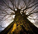 Tree_of_knowledge