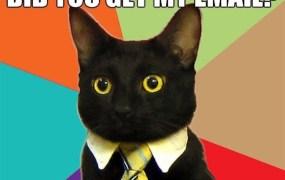 email cat
