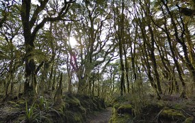 The Enchanted Forest in New Zealand as captured on Google Street View