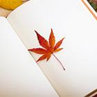 עיצוב ועימוד ספרים וחוברות