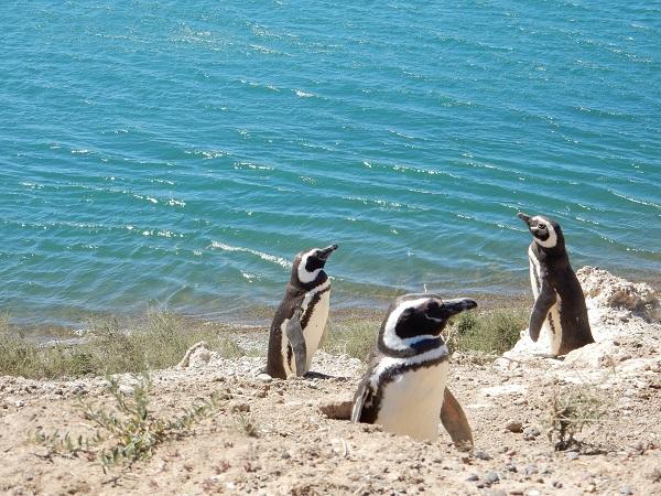 Onderonsje tussen de pinguïns