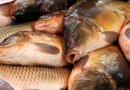 На рынках Днепропетровщины продают «опасную» рыбку: советы специалистов