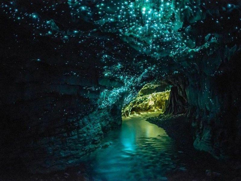 Waitomo Caves nueva zelanda