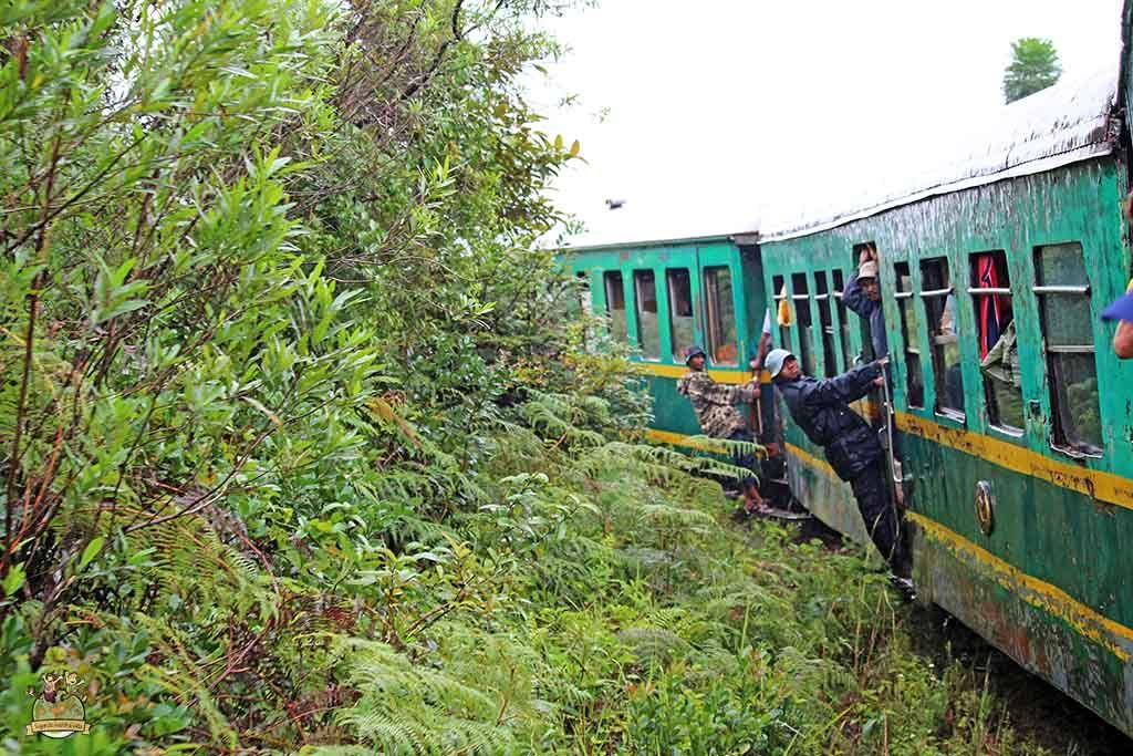Tren de la selva madagascar 4