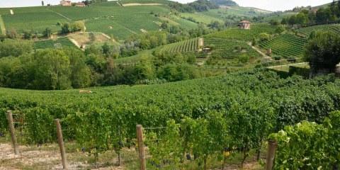 Paisaje vitivinícola del Piamonte: Langhe-Roero y Monferrato