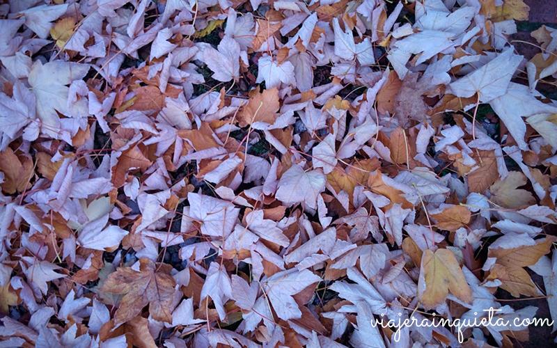otoño en berlin-6