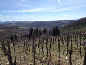 Our vineyard