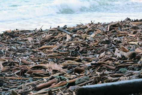 Palmerston driftwood