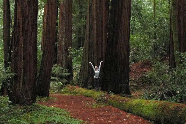 elizabeth redwoods-fb