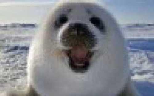 Моделирование слуховых препаратов