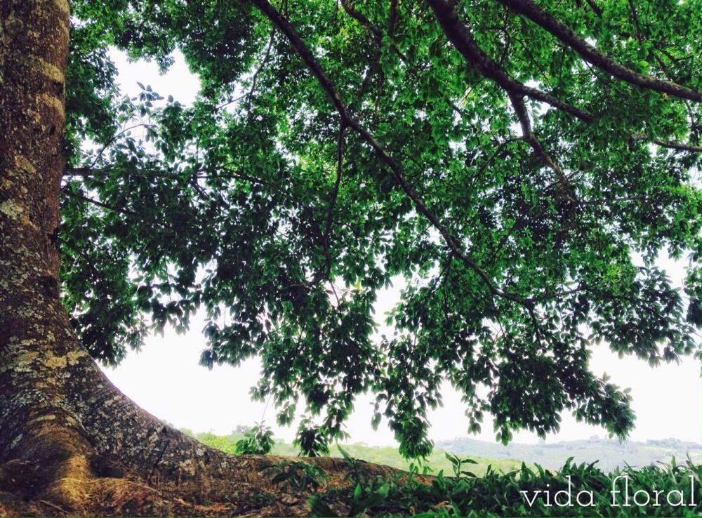 Árvore da Vida_Sílvia Kalvon