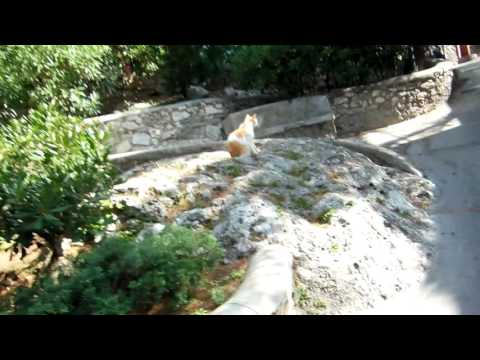 villa-of-tiberius-on-capri-island-in-italy-walk-up-introduction35_thumbnail.jpg